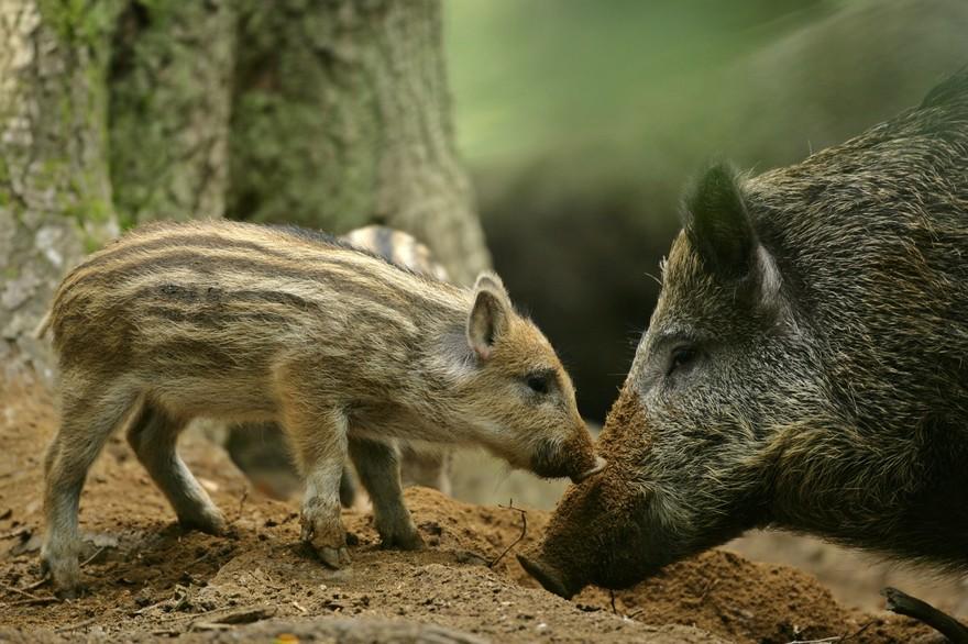 Read more about the article L'indemnisation des agriculteurs par les fédérations de chasseurs