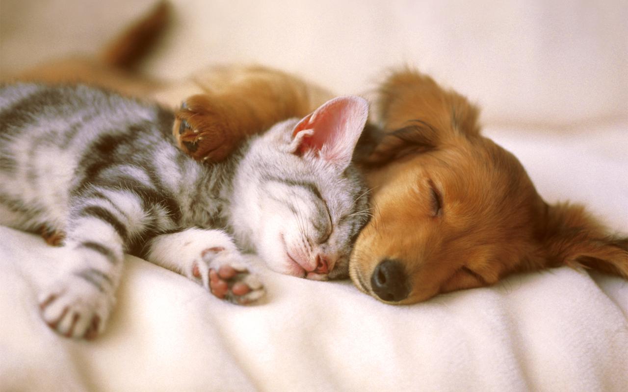 chat chien réveillon