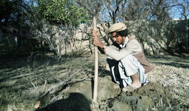 Read more about the article Planter un arbre, un ravissement
