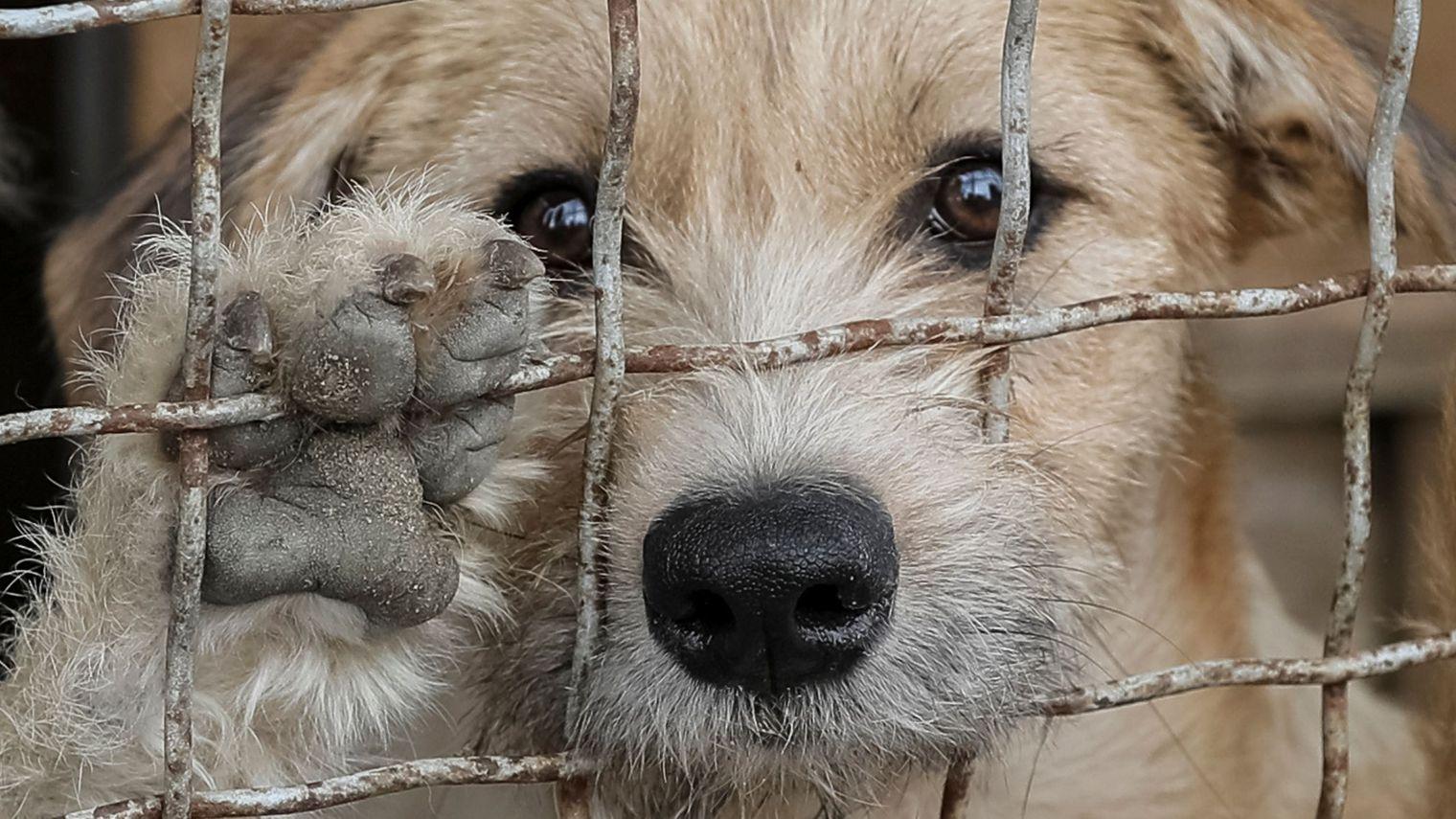 Read more about the article Les animaux abandonnés en été, une catastrophe de grande ampleur