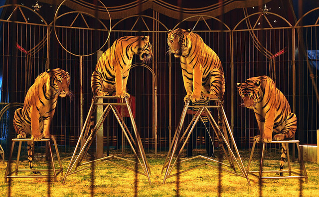 Read more about the article La Gauche et l'interdiction des cirques exploitant les animaux