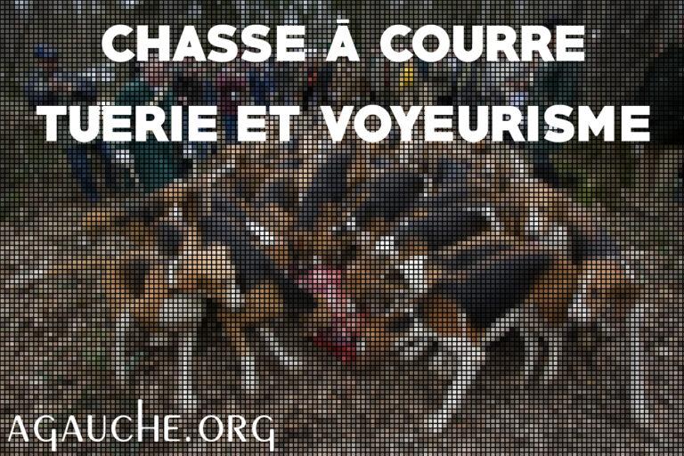 Read more about the article Chasse à courre, tuerie et voyeurisme