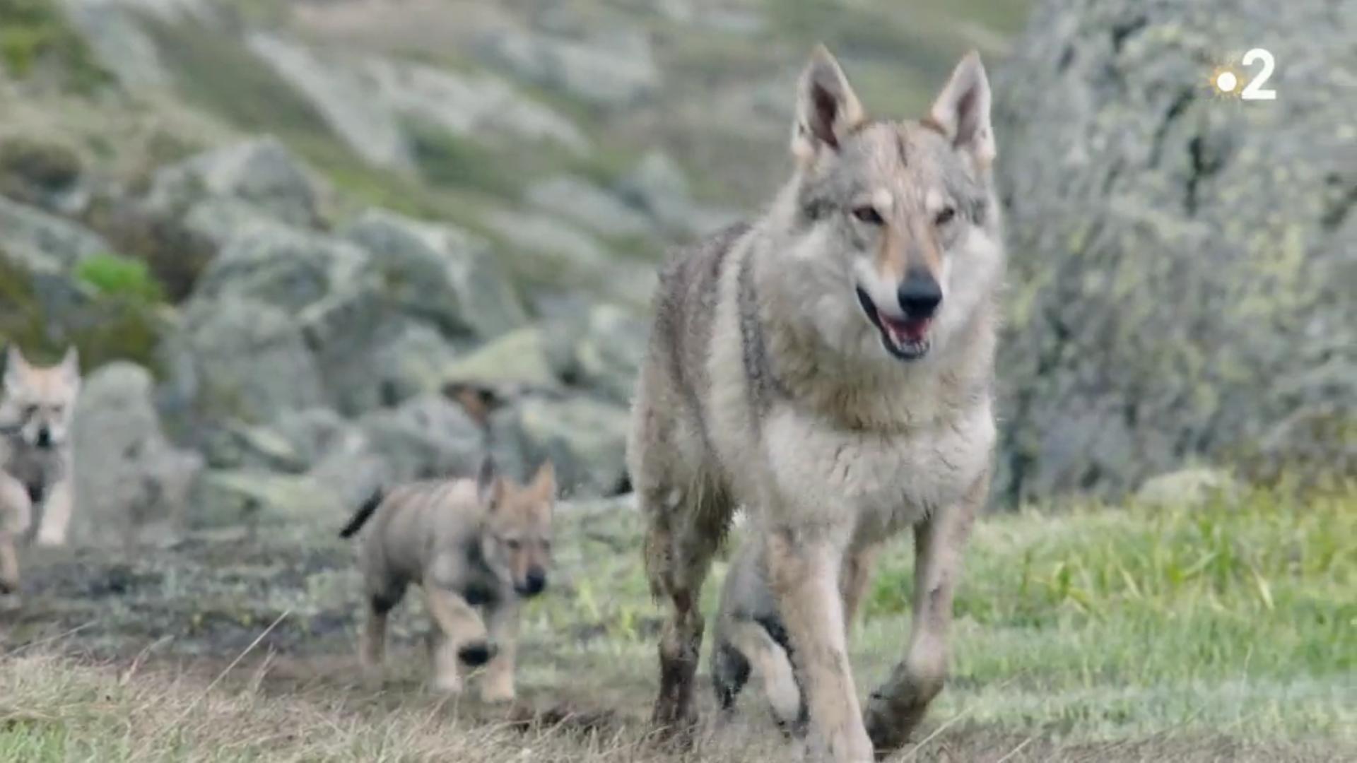 Read more about the article L'entraide dans la vie naturelle mise en avant dans un documentaire diffusé par France 2