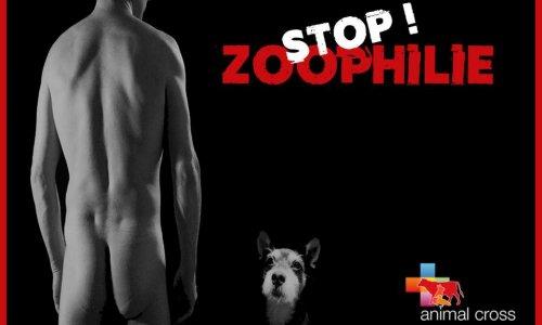 Read more about the article «Stop à la diffusion d'images et d'annonces zoophiles sur internet!»