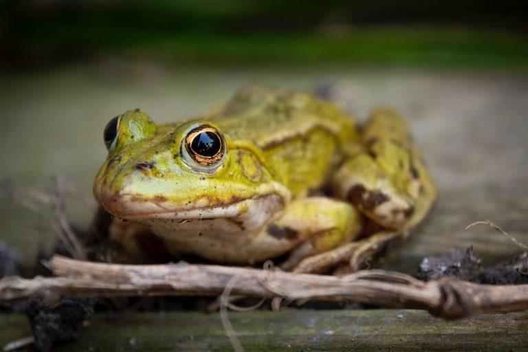 Read more about the article Migration des amphibiens: la LPO appelle à ouvrir l'œil sur les routes