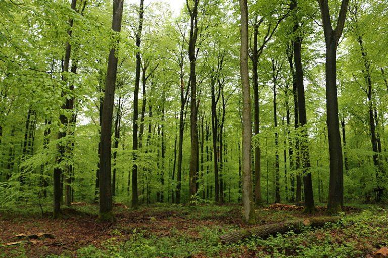 Read more about the article Affaire de la forêt de Retz: le président des chasseurs se cache derrière les notables