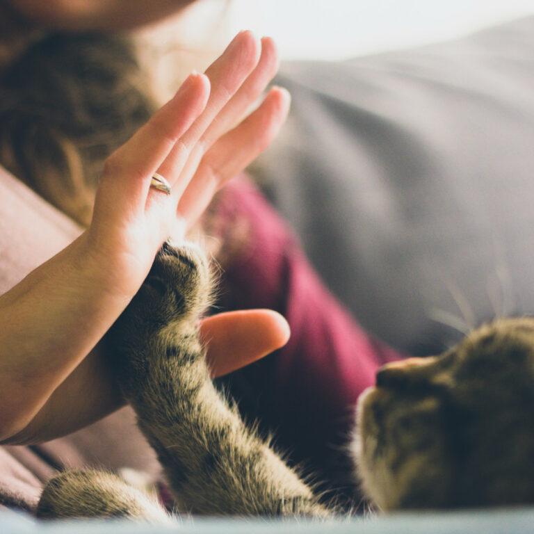 Read more about the article Confinement: les vétérinaires restent ouverts