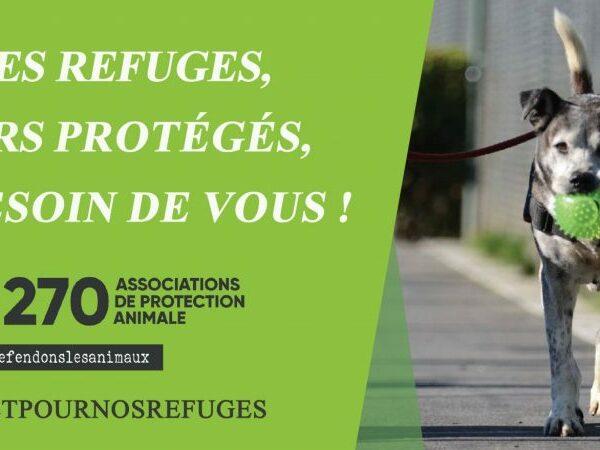 Défense de l'animal: «Les refuges, leur protégés, ont besoin de vous!»