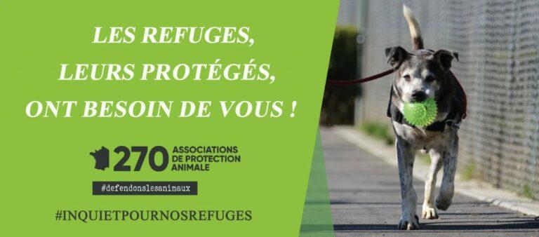 Read more about the article Défense de l'animal: «Les refuges, leur protégés, ont besoin de vous!»