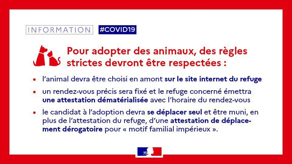 Read more about the article Adoption d'animaux malgré le confinement: la SPA provoque l'imbroglio