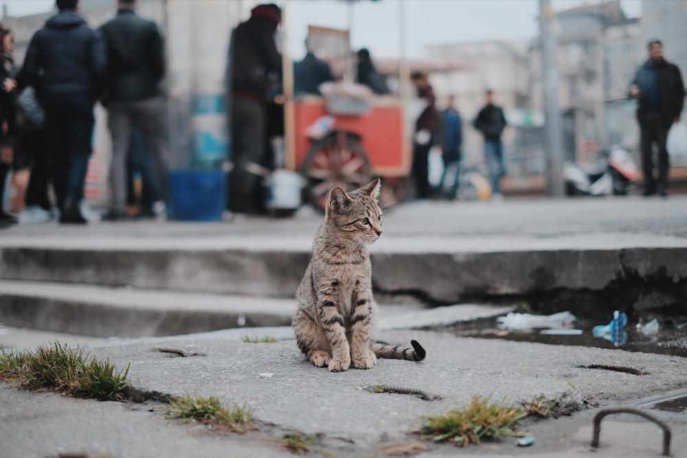 Read more about the article «Un soutien suite à condamnation interpellation pour nourrissage de chat»