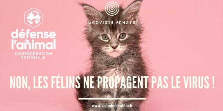Read more about the article Défense de l'Animal: «Non, les félins ne propagent pas le virus!»