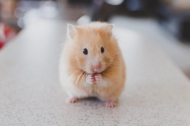 Les chiffres de l'expérimentation animale en France en 2018, donnés deux ans après