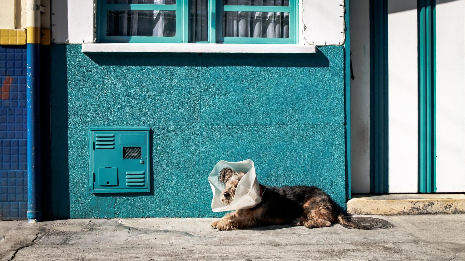 Read more about the article Atlas des vétérinaires: une situation indigne par rapport aux animaux