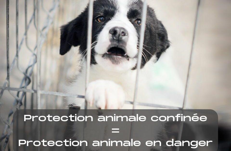 Read more about the article Confinement : les demandes de la protection animale