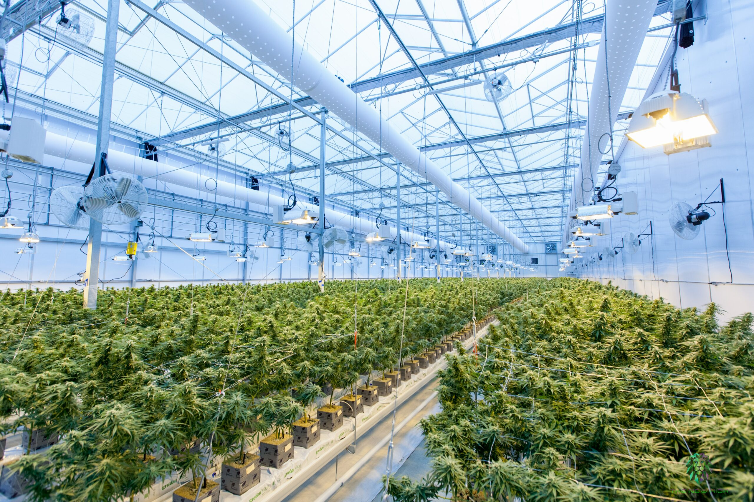Read more about the article Cannabis: la Cour de justice de l'Union européenne impose le CBD à la France