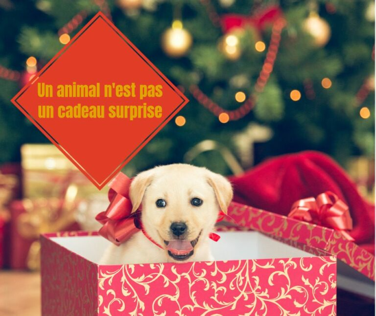 Read more about the article Noël: la confédération Défense de l'animal rappelle que les animaux ne sont pas des objets à offrir