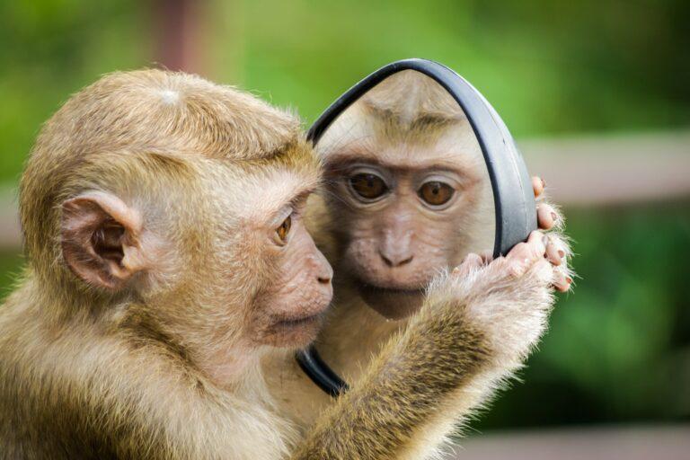 Read more about the article Des étudiants opposés à un centre de primatologie à l'Université de Strasbourg
