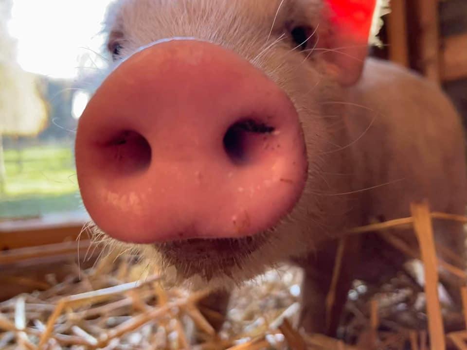 L'association de protection animale «Liberty» a besoin d'aide