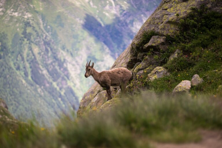 Read more about the article La question animale hante la France