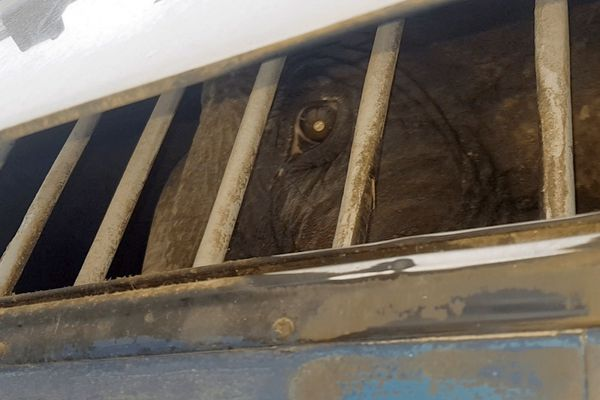 Signez la pétition de One Voice pour l'éléphante Dumba cachée par un cirque