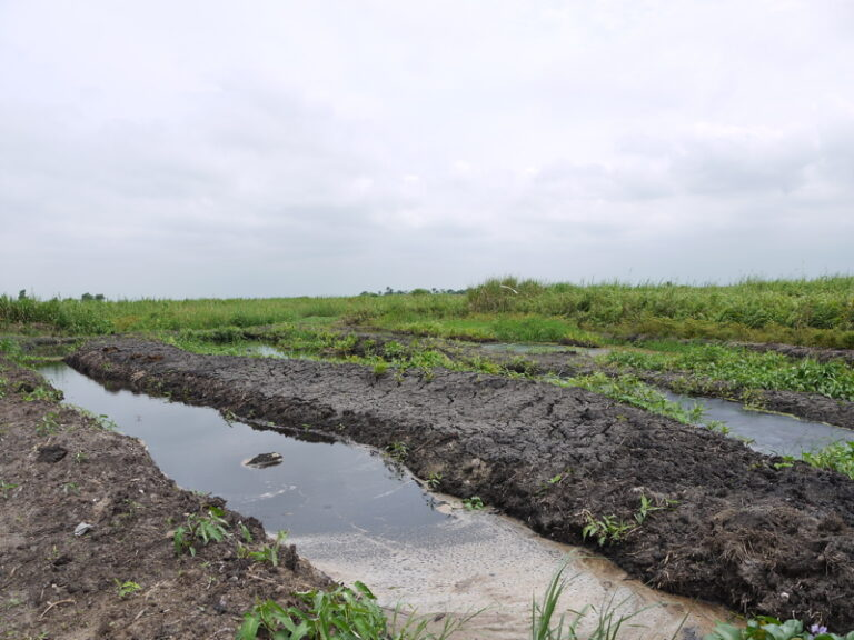 Read more about the article Communiqué de la SNPN pour la journée mondiale des zones humides