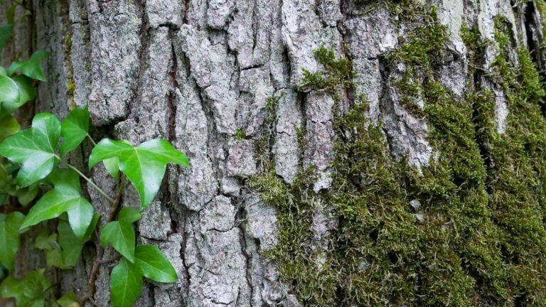 Read more about the article Pétition contre le massacre des arbres en Forêt de Sénart