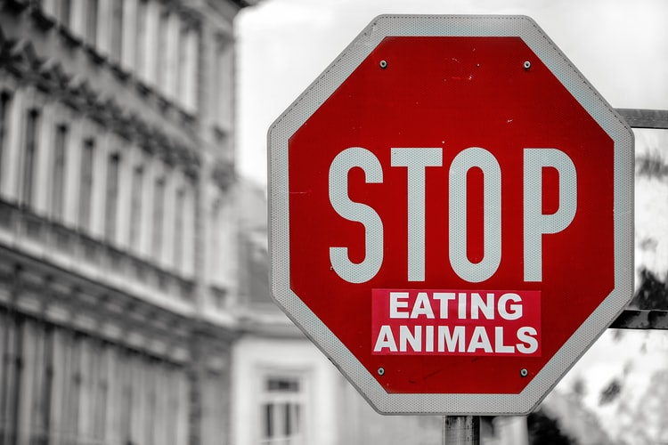 Vegan oui… mais non, confort oblige