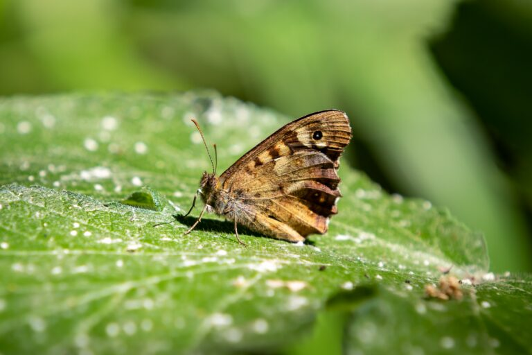 Read more about the article En France, une partie de la faune et de la flore disparaît