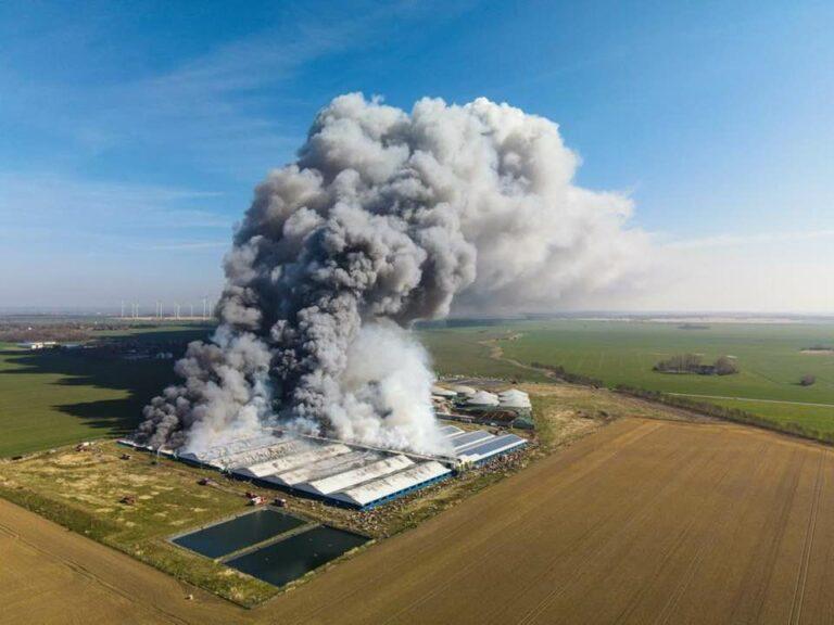 Read more about the article 55 000 cochons meurent dans l'incendie de l'élevage allemand d'Alt Tellin