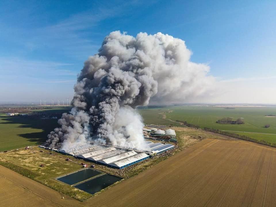 55 000 cochons meurent dans l'incendie de l'élevage allemand d'Alt Tellin