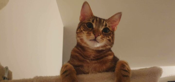 chat pris en charge par l'association Pattes en rond
