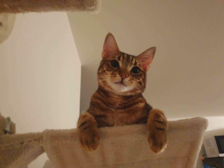 Read more about the article L'enfer est pavé de bonnes intentions: les chats errants