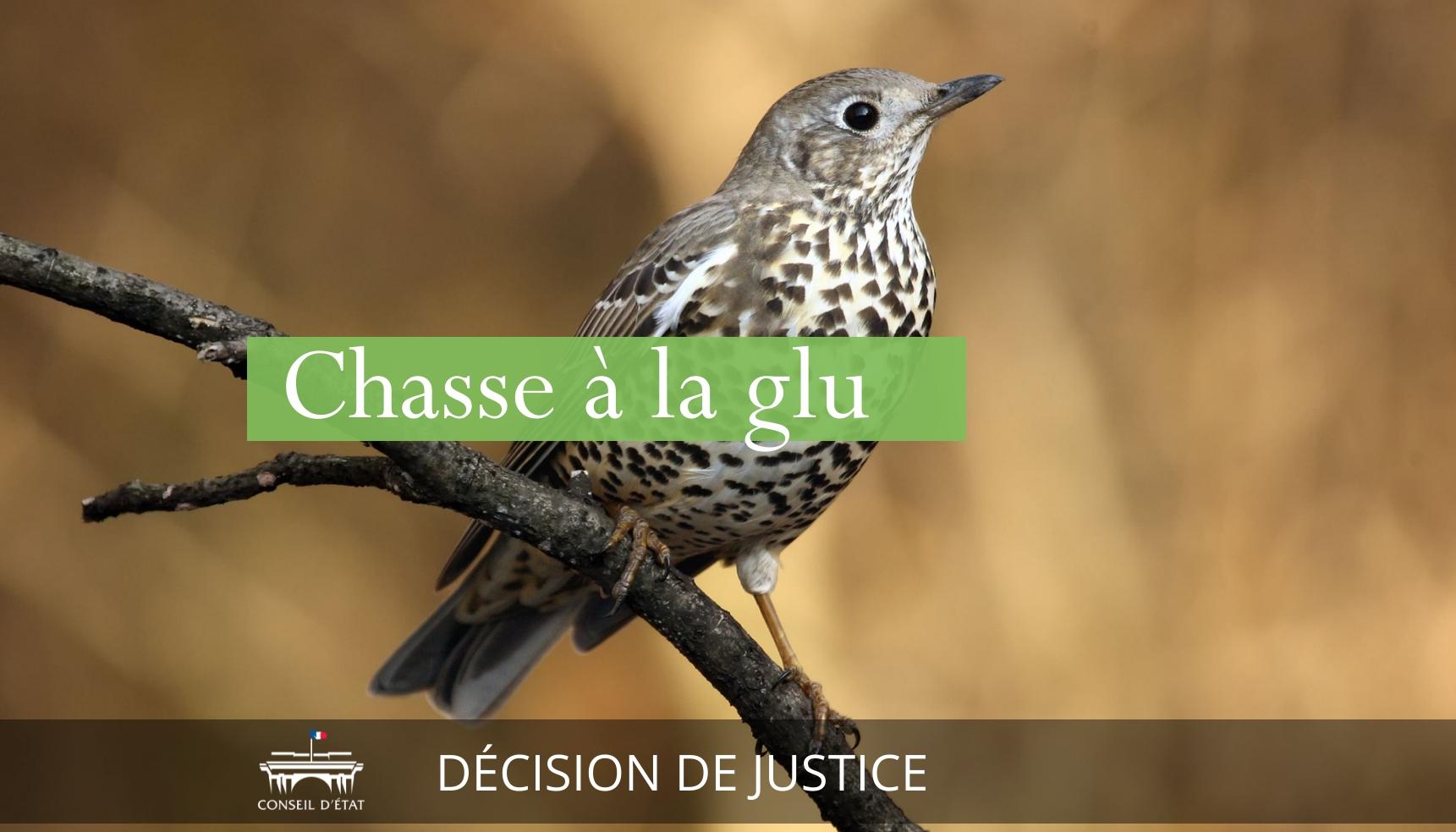 Enfin ! La chasse à la glu est déclarée illégale en France