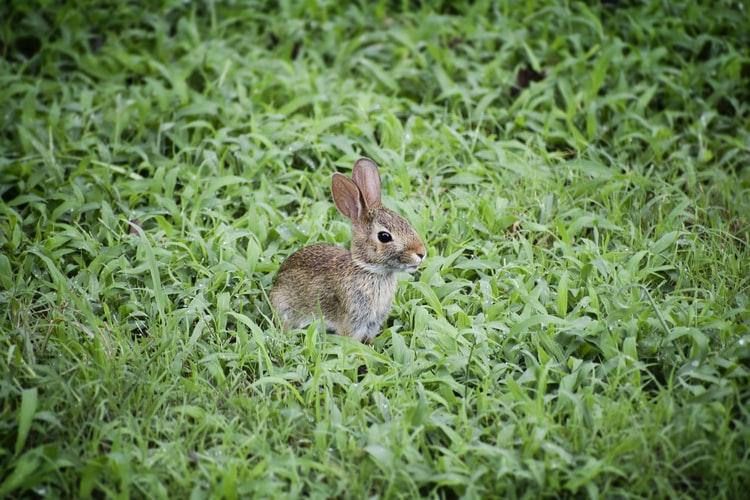 Ce matin, un lapin…