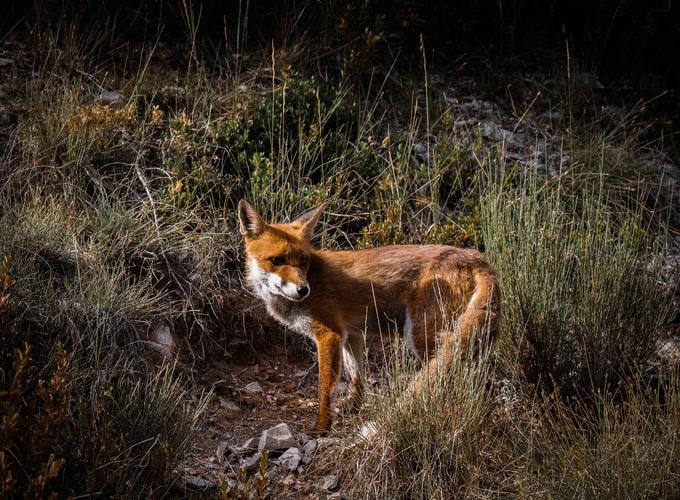 Exemplaire: la ville de Privas soutient un centre de soins pour animaux sauvages