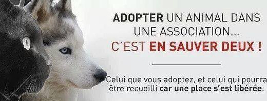 Adopte un animal dans une association... c'est en sauver deux !