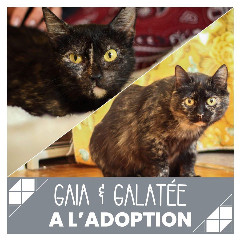 nine lives paris - Gaia et Galatée à l'adoption