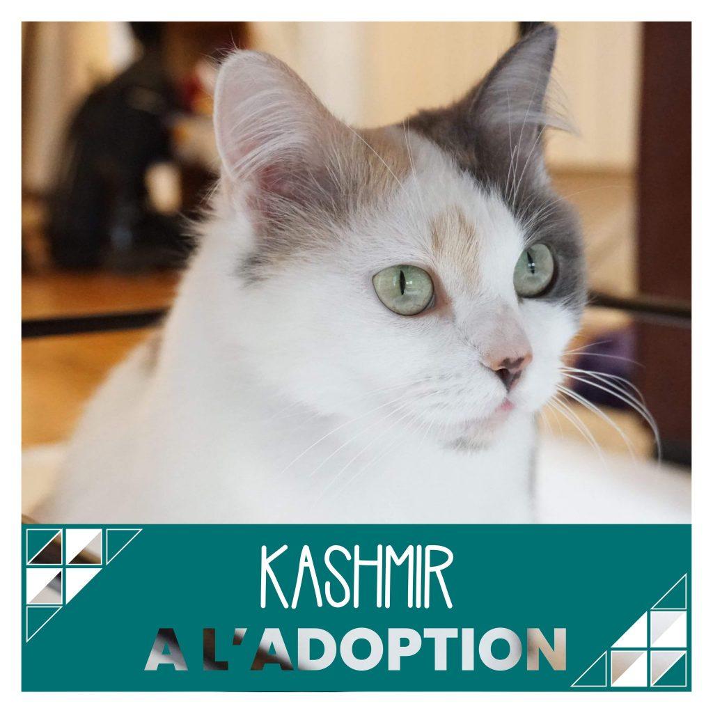 nine lives paris - Kashmir à l'adoption