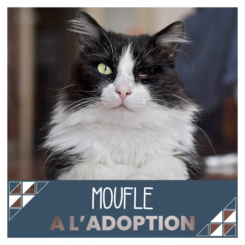 nine lives paris - Moufle à l'adoption