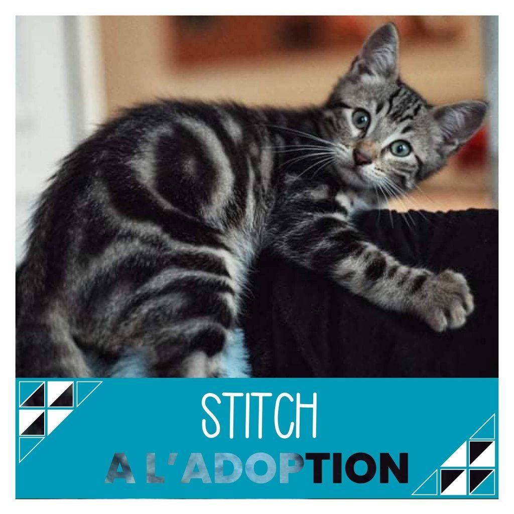 nine lives paris - Stitch à l'adoption