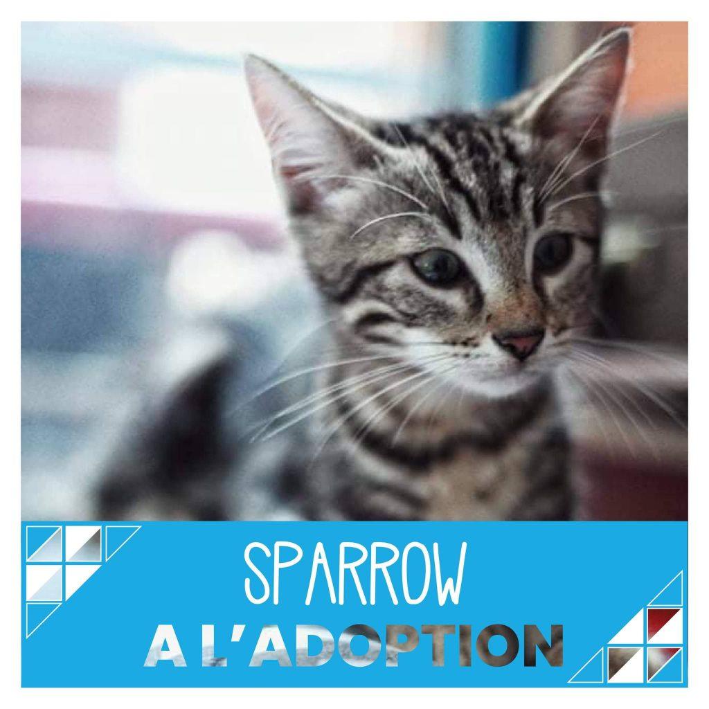nine lives paris - Sparrow à l'adoption