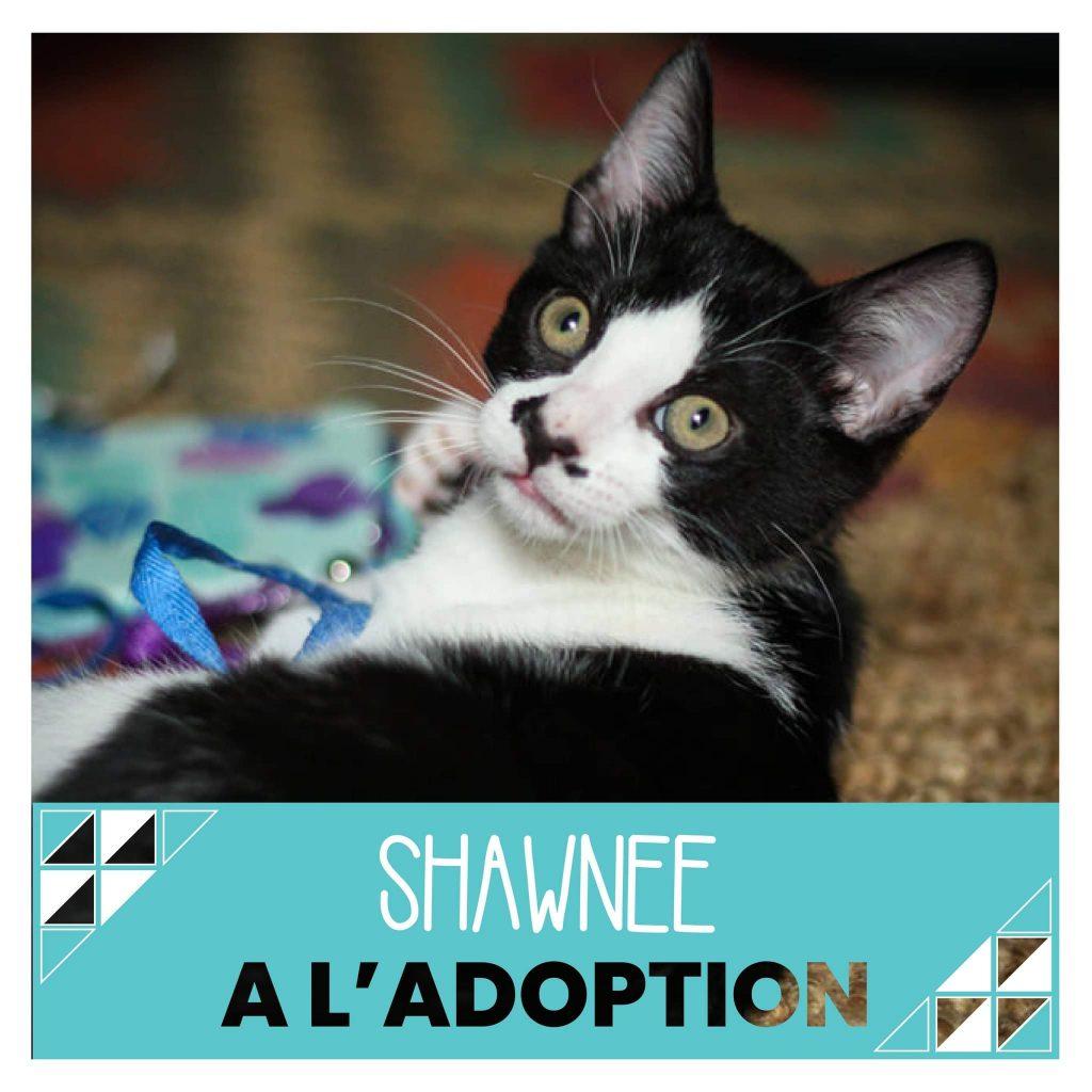 nine lives paris - Shawnee à l'adoption