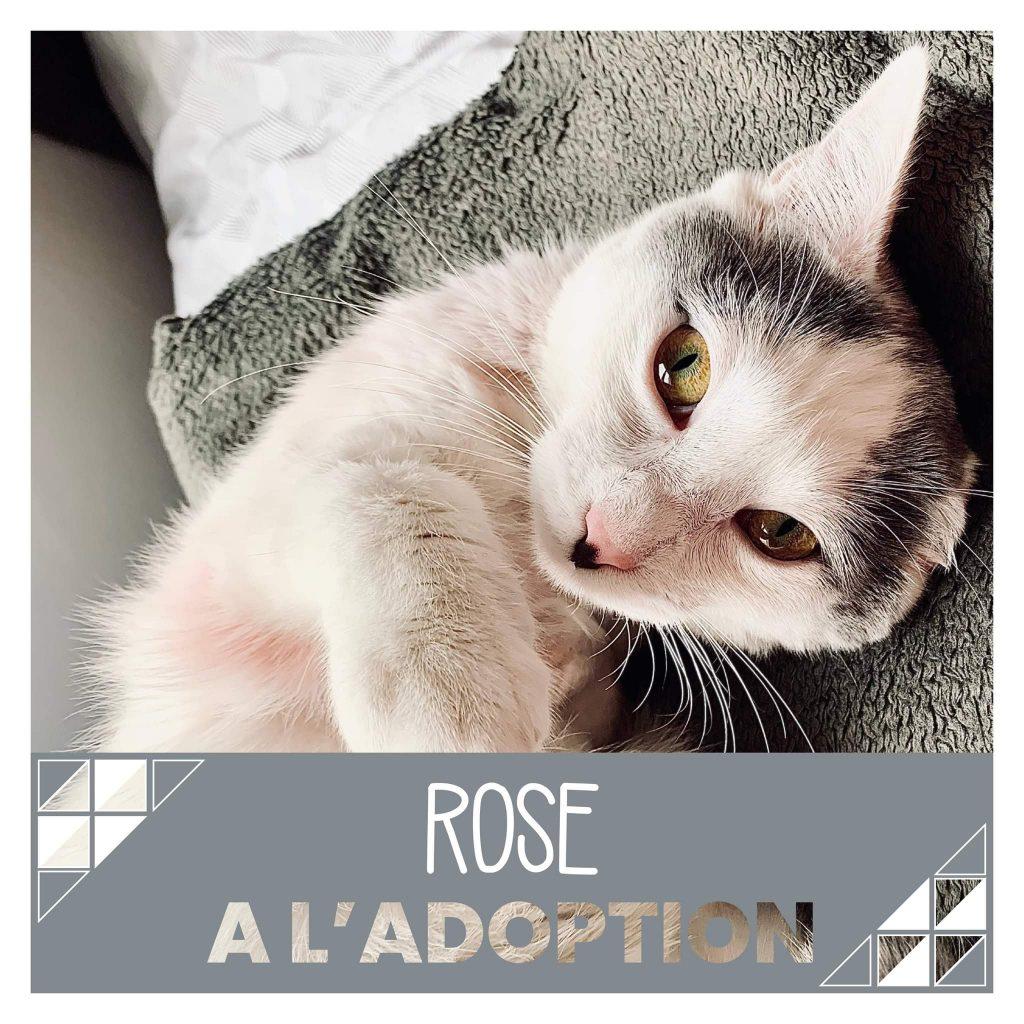 nine lives paris - Rose à l'adoption