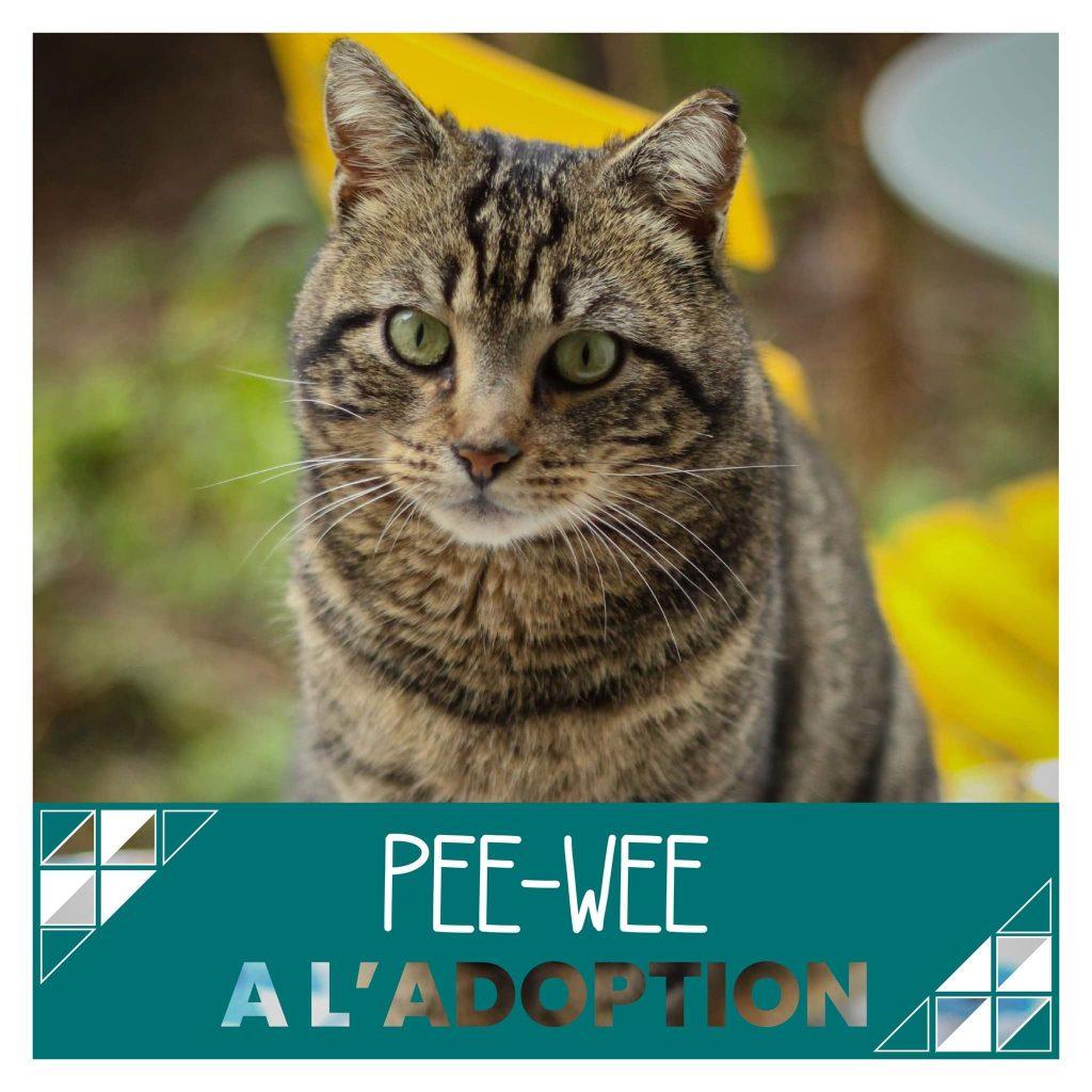 nine lives paris - Pee-Wee à l'adoption