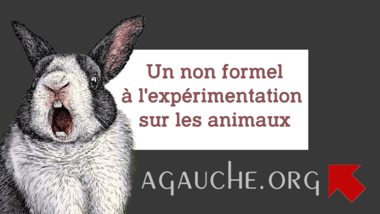 Read more about the article «Nouveaux aliments»: l'expérimentation animale systématique