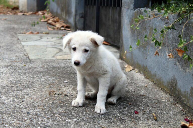 Read more about the article Appel au gouvernement contre l'abandon des animaux