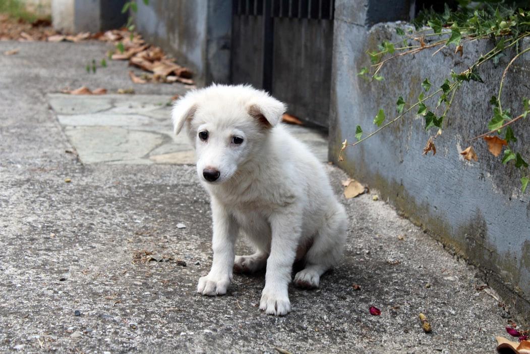 Appel au gouvernement contre l'abandon des animaux