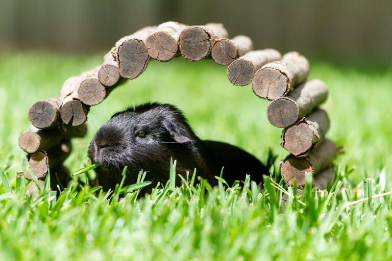 Read more about the article La SPA annonce un record d'abandons d'animaux pour l'été 2021
