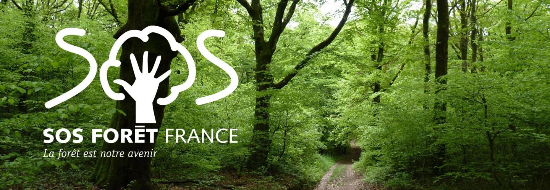 Read more about the article L'appel du collectif SOS forêt France
